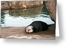 Sleepy Sea Otter Greeting Card