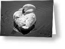 Sleepy Swan Greeting Card