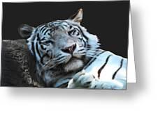 Sleepy Tigress Greeting Card