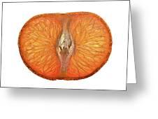 Slice Of A Mandarin Orange Greeting Card