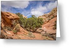 Slick Rock Greeting Card