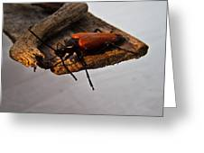 Sliding Beetle Greeting Card