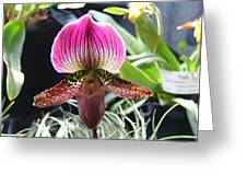 Slipper Foot Orchid Greeting Card