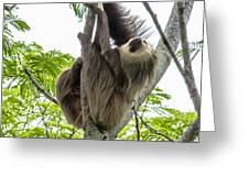 Sloth1 Greeting Card