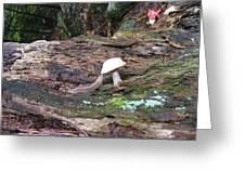 Slug And Mushroom Greeting Card