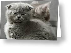 Slumbering Cat Greeting Card