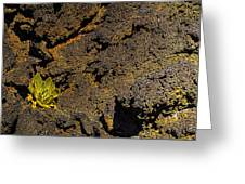 Small Aloe In Lava Flow Greeting Card