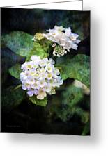 Small Blossoms 4948 Idp_2 Greeting Card