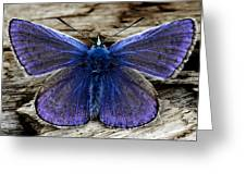 Small Blue Butterfly On A Piece Of Wood In Ireland Greeting Card