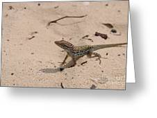 Small Brown Lizard Sitting On A White Sand Beach Greeting Card