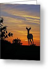 Small Buck Against Sunset Greeting Card by Ron Kruger