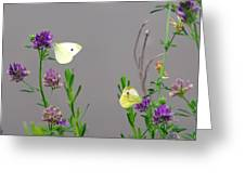 Small Butterflies Sipping Flower Nectar Greeting Card