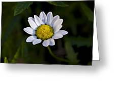 Small Daisy Greeting Card