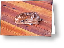 Small Deer Fawn Resting On Cedar Wood Deck Greeting Card