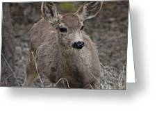 Small Fawn In Tombstone Greeting Card