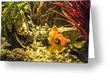 Small Fish In An Aquarium Greeting Card