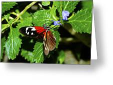 Small Flower Big Tongue Greeting Card