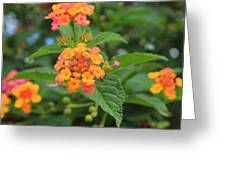 Small Flowers On A Tree Greeting Card