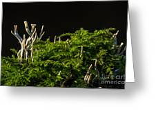Small Forest Greeting Card