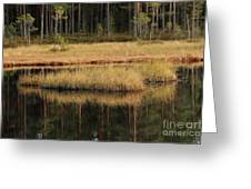 Small Forest Lake In Autumn Greeting Card
