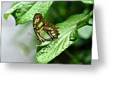 Small Green Greeting Card