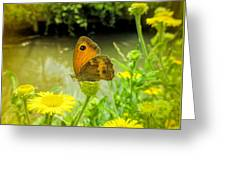 Small Heath Butterfly Greeting Card