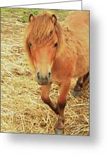 Small Horse Large Beauty Greeting Card