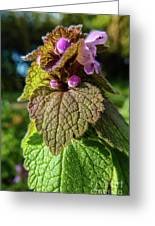 Small Mauve Flowers 7 Greeting Card