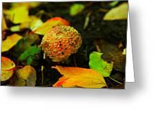 Small Mushroom In Autumn Greeting Card