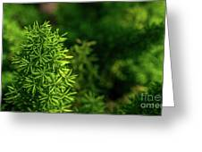 Small Plants Greeting Card