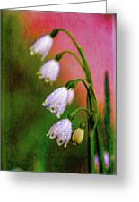 Small Signs Of Spring Greeting Card