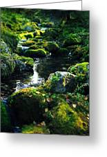 Small Stream In Green Forest Lapland Greeting Card