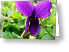 Small Violet Flower Greeting Card