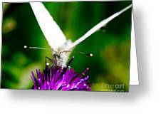 Small  White Cabbage Butterfly Pieris Rapae Greeting Card