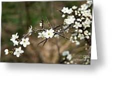 Small White Flowers Of Thorns Greeting Card