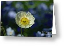Small White Poppy Greeting Card