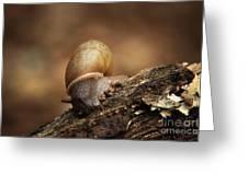 Small Wonder Greeting Card