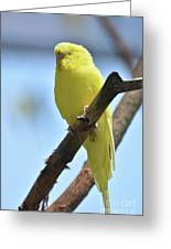 Small Yellow Budgie Parakeet In The Wild Greeting Card