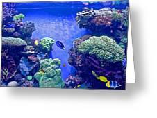 Smaller Fish In Monterey Aquarium-california  Greeting Card