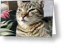 Smartycat Greeting Card