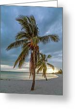 Smathers Beach Coconut Sunset Greeting Card