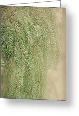 Smell The Pine Greeting Card