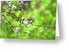 Smelling The Cherry Blossom Male  American Goldfinch Greeting Card