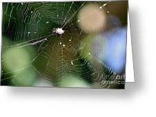 Smiley Spider Web  Greeting Card