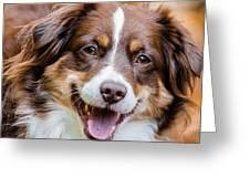 Smiling Dottie Greeting Card