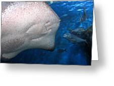 Smiling Fish Greeting Card