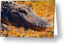 Smiling Gator Greeting Card