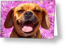 Smiling Pug Greeting Card