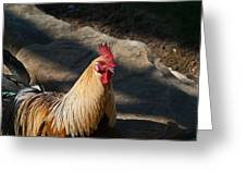 Smiling Rooster Greeting Card