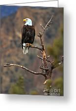 Smith Rock Bald Eagle Greeting Card